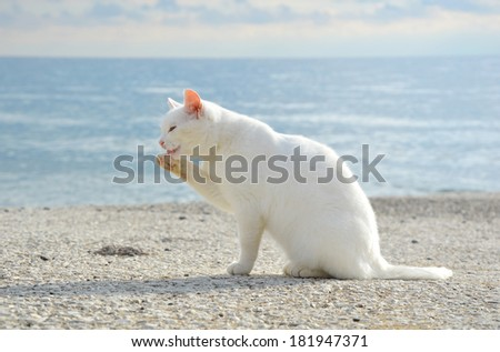 white cat grooming herself on the pier, with sea background - stock photo
