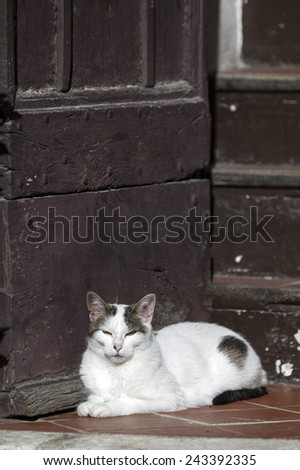 White cat in a sunny doorway - stock photo