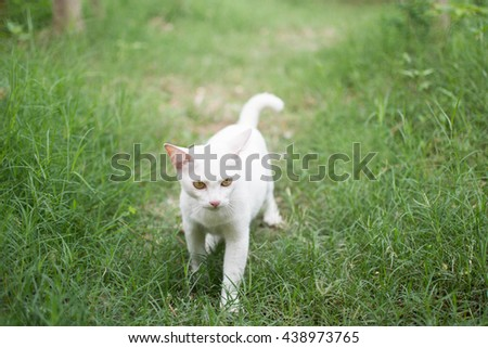 White cat in forest ,focus eye,close up;