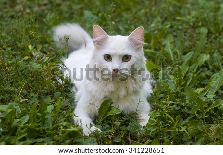 White cat in the grass