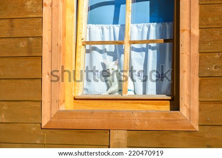 White cat in window of a wooden mountain house in Zakopane, High Tatra Mountains, Poland - stock photo