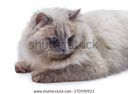 White cat isolated on a white background - stock photo