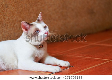 white cat lay down on tile floor - stock photo