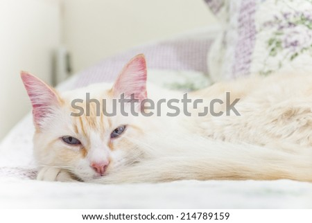 White cat lying on bed - stock photo