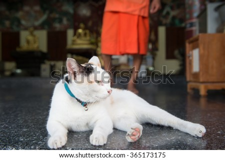 White cat lying on the temple.