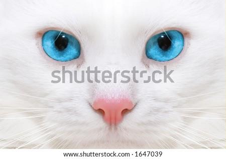 White cat:macro - stock photo