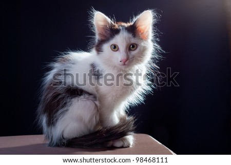White cat on a black background - stock photo