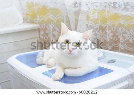 white cat on a white background - stock photo