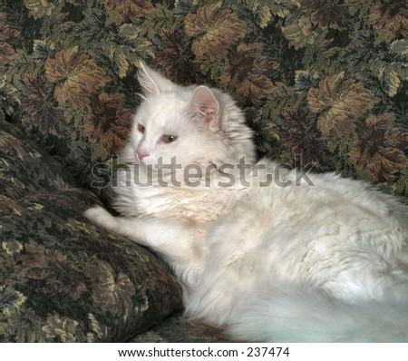 White cat on sofa - stock photo