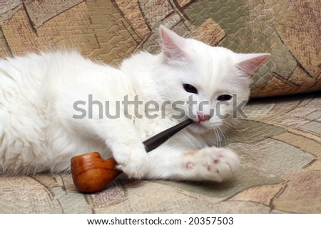 white cat on sofa with tobacco-pipe - stock photo