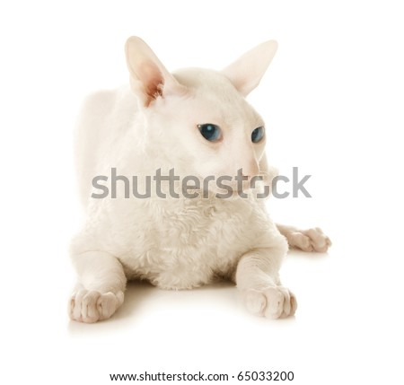 White cat on the white background - stock photo