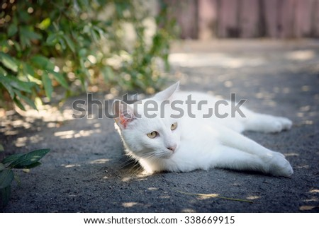 White cat playing outdoors - stock photo