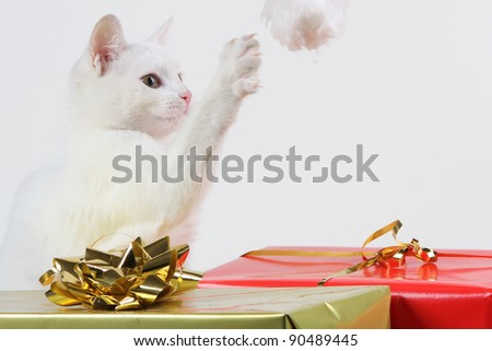 white cat playing with gift box - stock photo