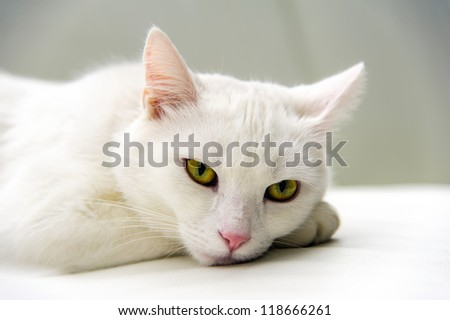 White cat portrait - stock photo