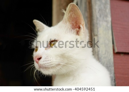 White cat relaxing:Close up,select focus with shallow depth of field.