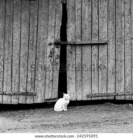 white cat sitting by a barn door background - stock photo