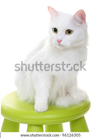 white cat sitting on a green stool. Vertical shooting. Isolated on a white background. - stock photo