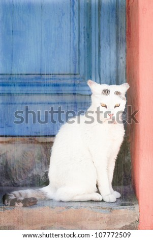 white cat sitting on stone steps with a vintage painterly feel
