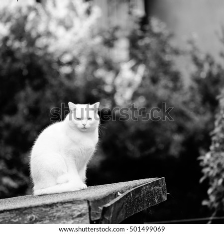 White cat sitting on top of a shed