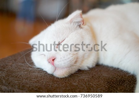 white cat sleep on the table