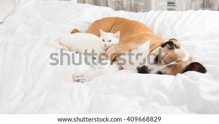 White Cat Sleeping Next to Very Large Fawn Dog - stock photo