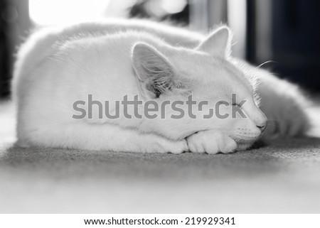 White cat sleeping on the carpet. - stock photo