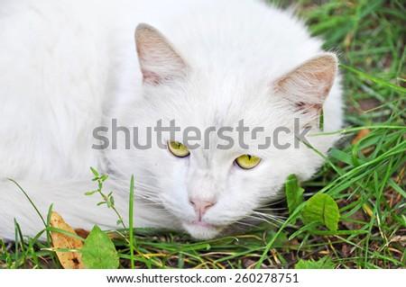 white cat sleeping on the grass - stock photo