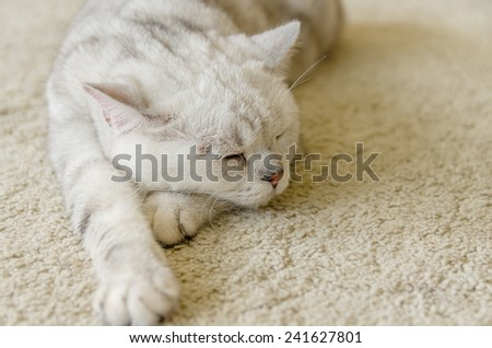 White cat sleeping on the white rug - stock photo