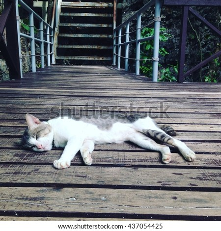 White cat sleeping on wood floor
