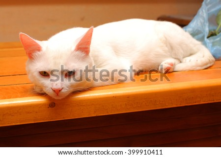 white cat sleeps on the windowsill - stock photo