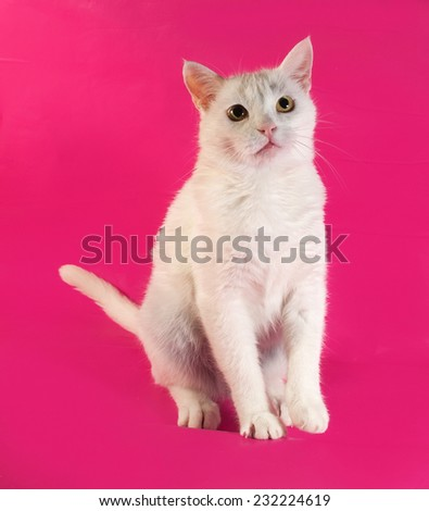 White cat standing on hind legs on pink background