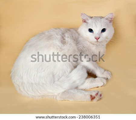 White cat with blue eyes lying on yellow background