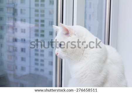 white cat with blue eyes sitting on the window sill and looking out the window - stock photo