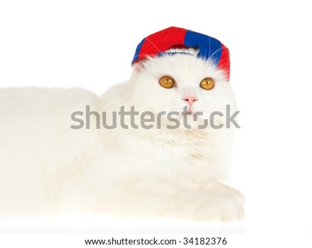 White cat with cap, on white background