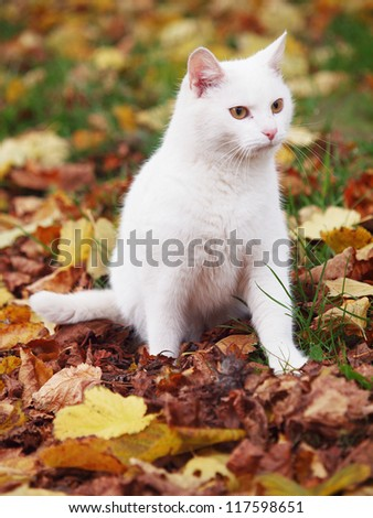 white cat with colorful leafs - stock photo