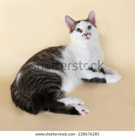 White cat with spots teenager lying on yellow background