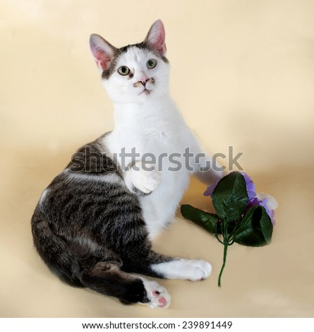White cat with spots teenager sitting next to red flower on yellow background - stock photo