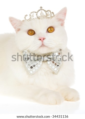 White cat with tiara crown and bow tie, on white background