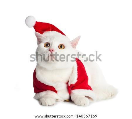 White Cat with yellow eyes on white background - stock photo