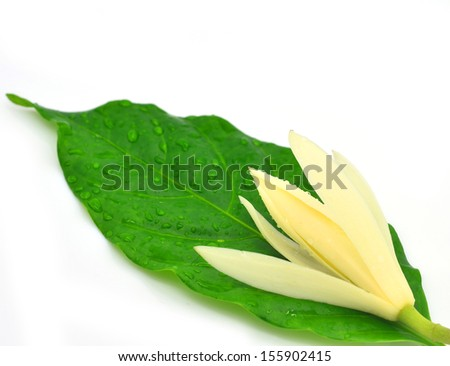 White Champaka isolated on the white background