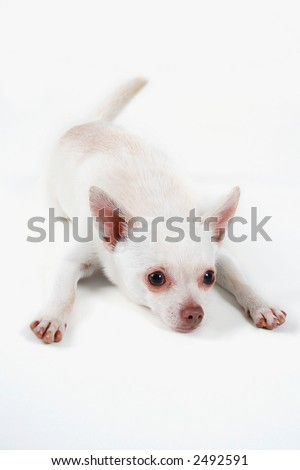 Pink Nose Stock Photos, Images, & Pictures | Shutterstock