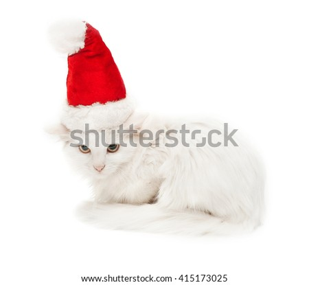White Christmas cat in the hat isolated on white background