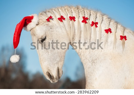 White christmas horse with santa hat and red bows in his mane - stock photo