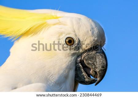 white cockatoo and blue sky - stock photo