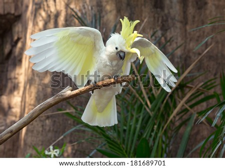 White cockatoo in the zoo. - stock photo