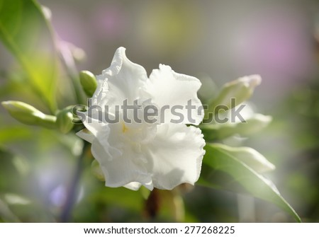 white color flower