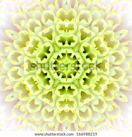 White Concentric Flower Center Macro Close-up. Mandala Kaleidoscopic design - stock photo