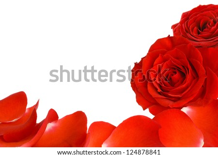 White copyspace with two red roses and petals as a border - stock photo