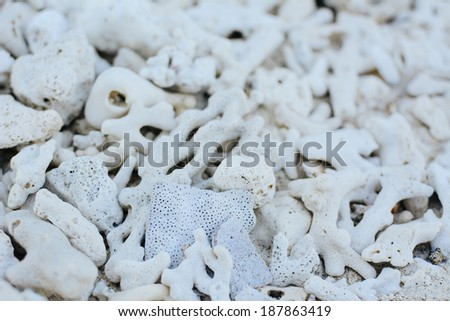 White coral beach background texture - stock photo