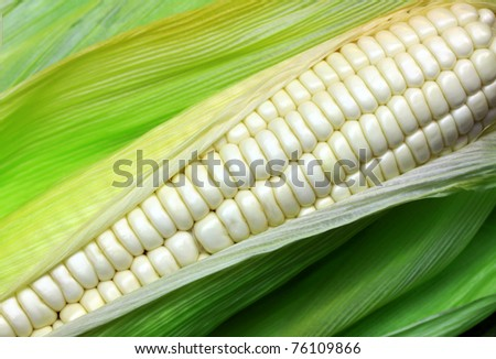 White corn. - stock photo
